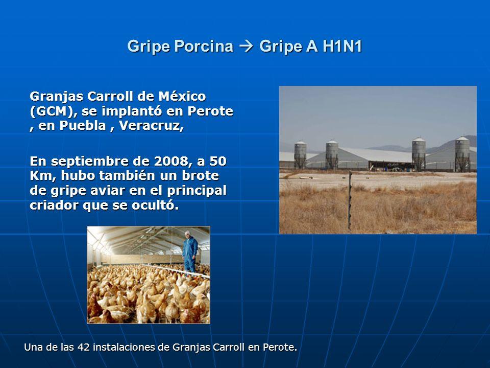 Gripe Porcina Gripe A H1N1 Granjas Carroll de México (GCM), se implantó en Perote, en Puebla, Veracruz, En septiembre de 2008, a 50 Km, hubo también u