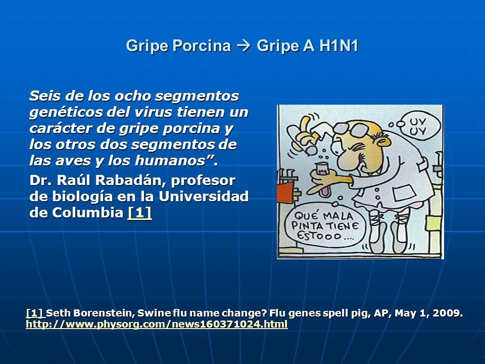 Gripe Porcina Gripe A H1N1 Seis de los ocho segmentos genéticos del virus tienen un carácter de gripe porcina y los otros dos segmentos de las aves y