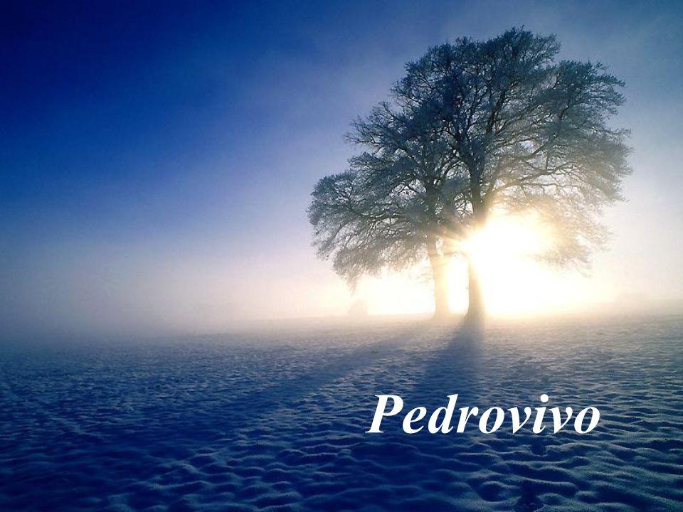 Pedrovivo