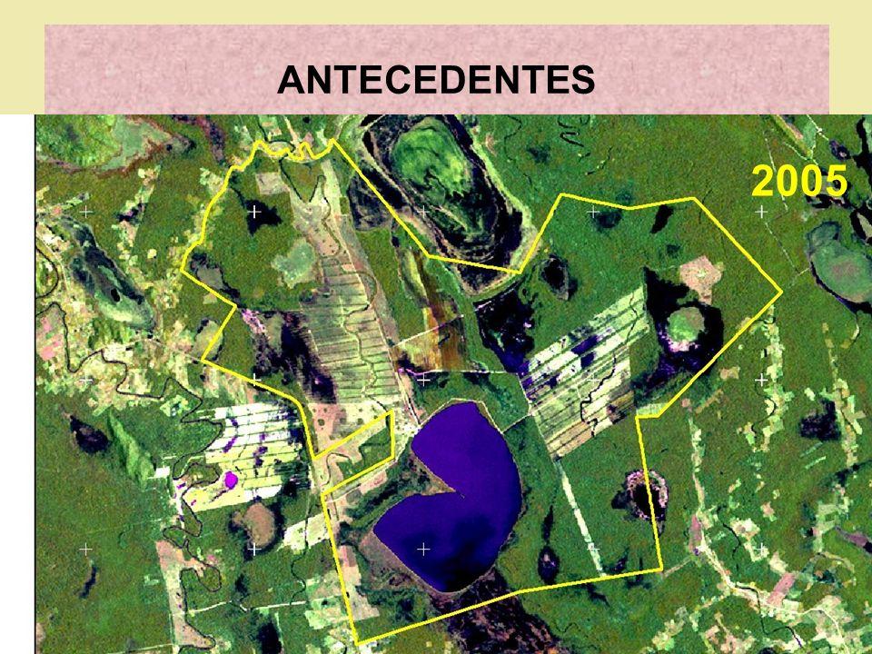 ANTECEDENTES 16 SEP 2005 COPNAG presenta memorial INRA Santa Cruz Empresa Agropecuaria Laguna Corazón Saneamiento Cambio de nombre: Branko a EALC S.A.