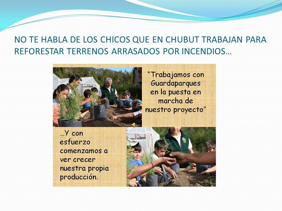 NO TE HABLA DE LOS CHICOS QUE EN CHUBUT TRABAJAN PARA REFORESTAR TERRENOS ARRASADOS POR INCENDIOS…