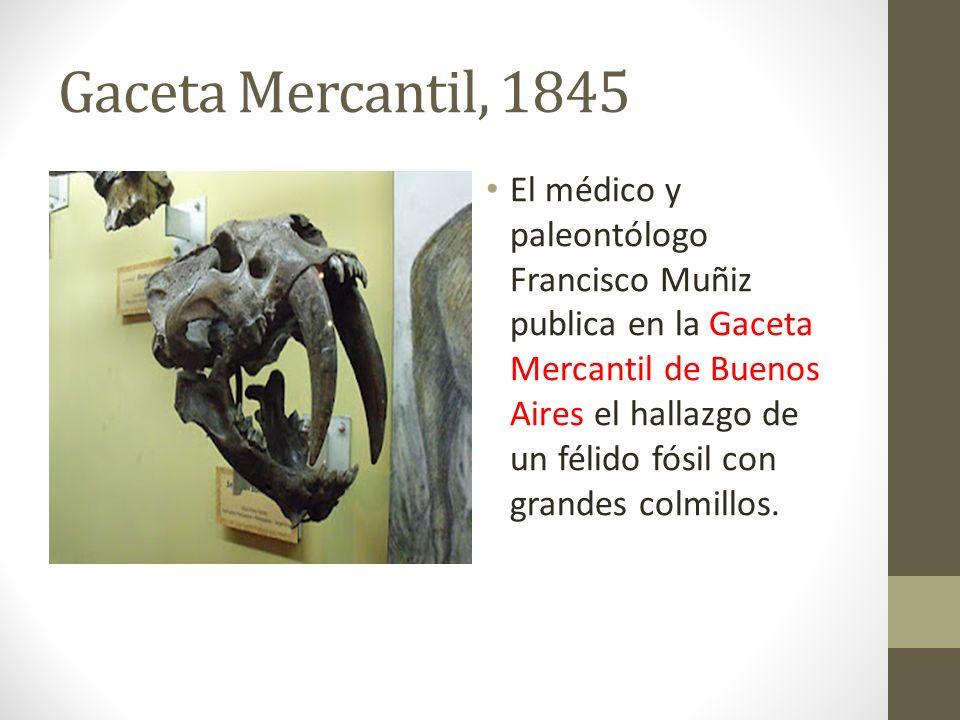 Gaceta Mercantil, 1845 El médico y paleontólogo Francisco Muñiz publica en la Gaceta Mercantil de Buenos Aires el hallazgo de un félido fósil con gran
