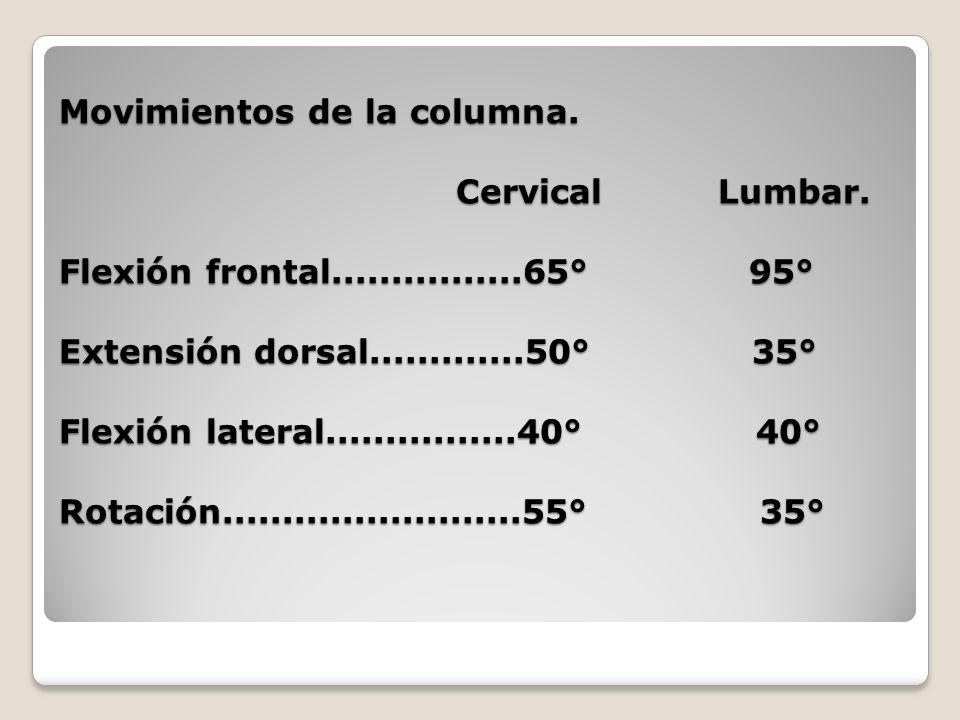 Movimientos de la columna. Cervical Lumbar. Flexión frontal................65° 95° Extensión dorsal.............50° 35° Flexión lateral...............