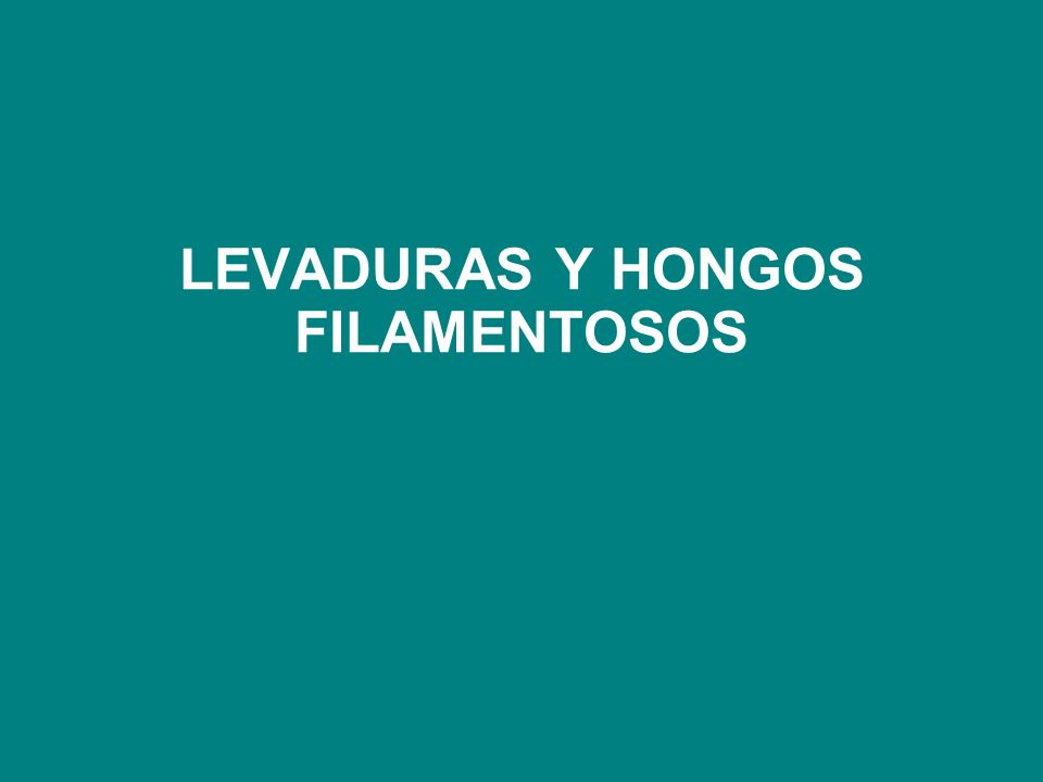 LEVADURAS Y HONGOS FILAMENTOSOS