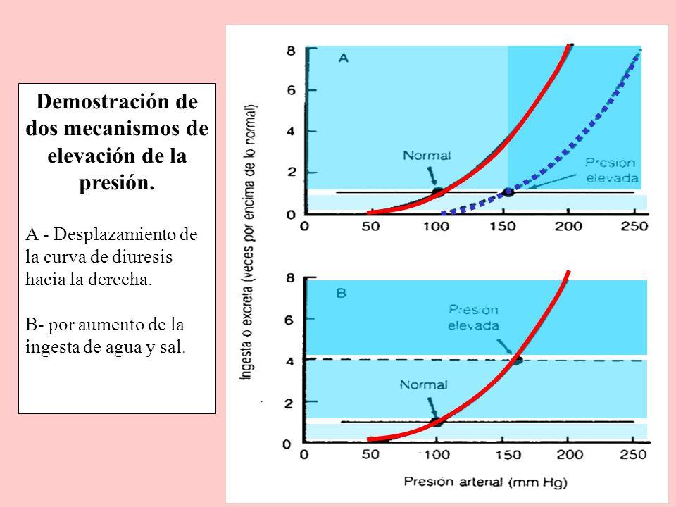 Demostración de dos mecanismos de elevación de la presión. A - Desplazamiento de la curva de diuresis hacia la derecha. B- por aumento de la ingesta d