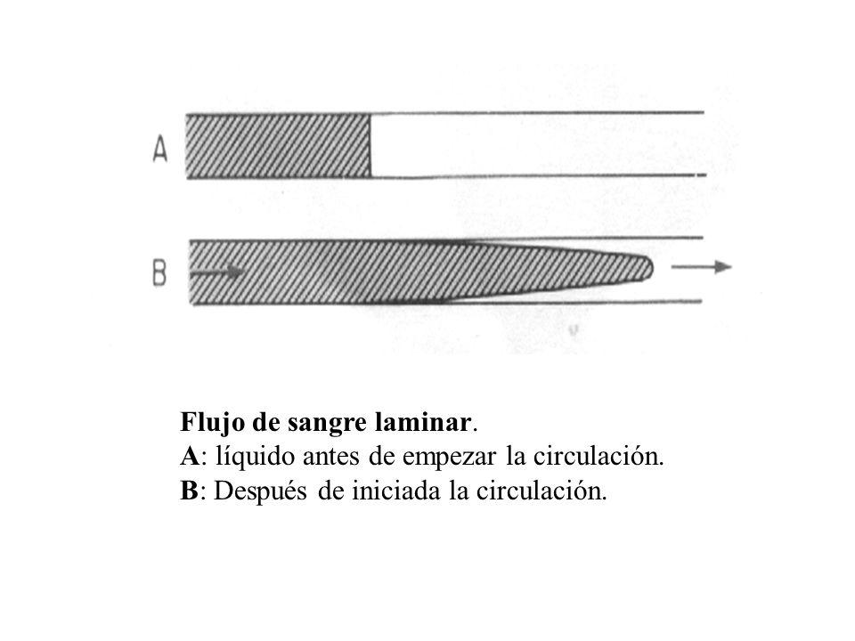 Flujo de sangre laminar. A: líquido antes de empezar la circulación. B: Después de iniciada la circulación.