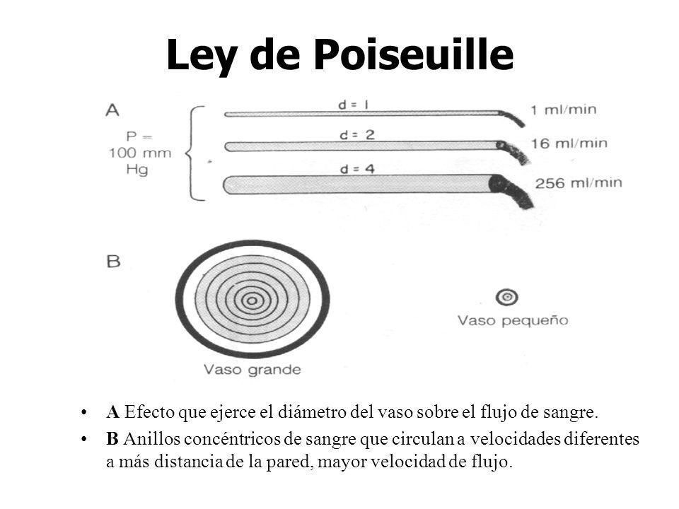 Ley de Poiseuille A Efecto que ejerce el diámetro del vaso sobre el flujo de sangre. B Anillos concéntricos de sangre que circulan a velocidades difer