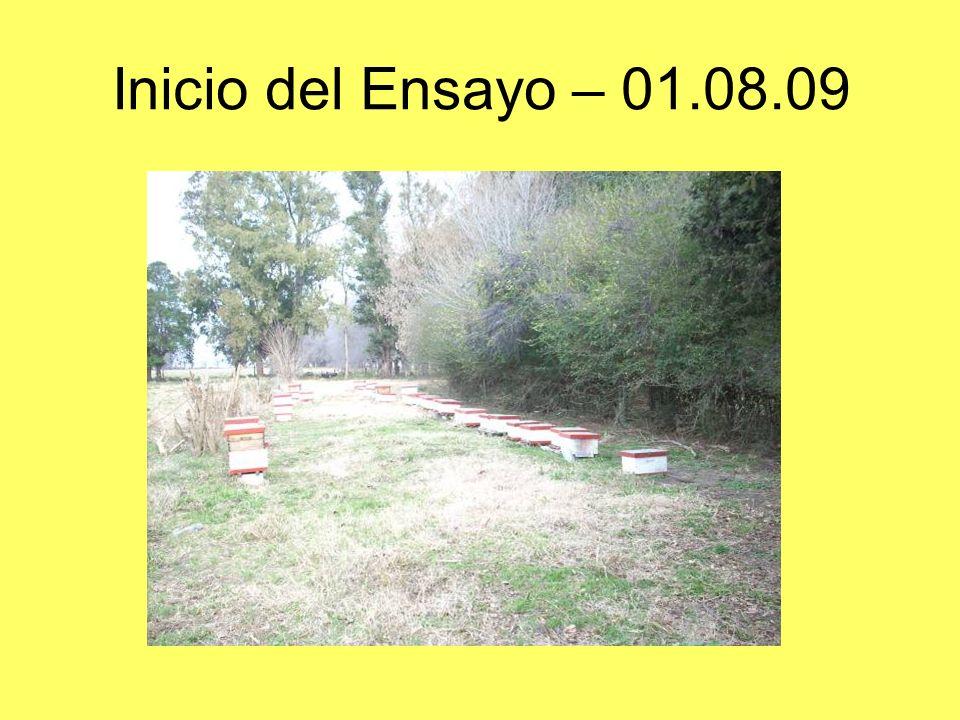 Inicio del Ensayo – 01.08.09