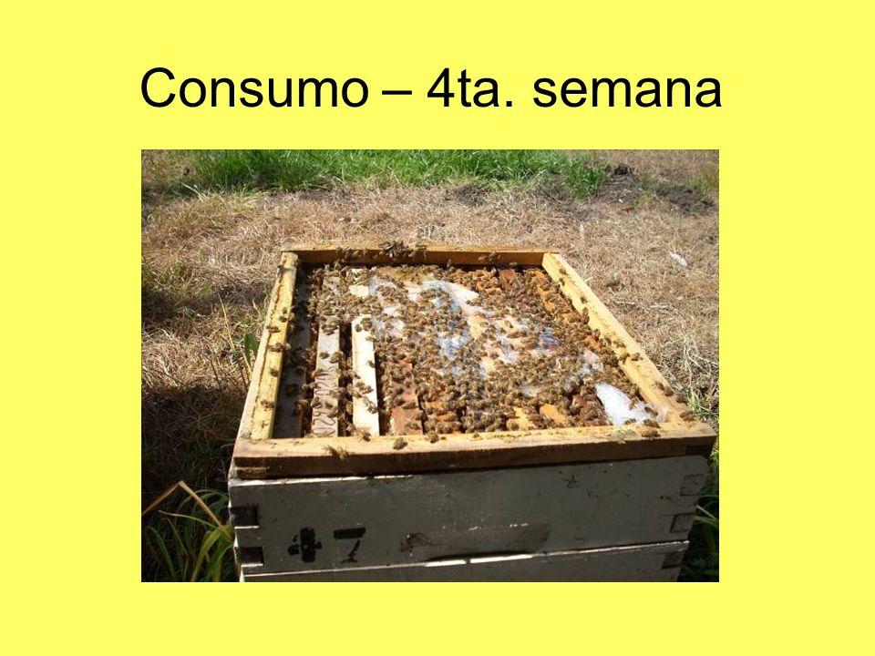 Consumo – 4ta. semana
