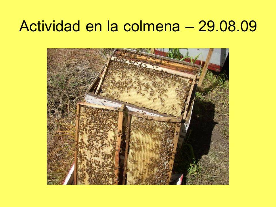 Actividad en la colmena – 29.08.09