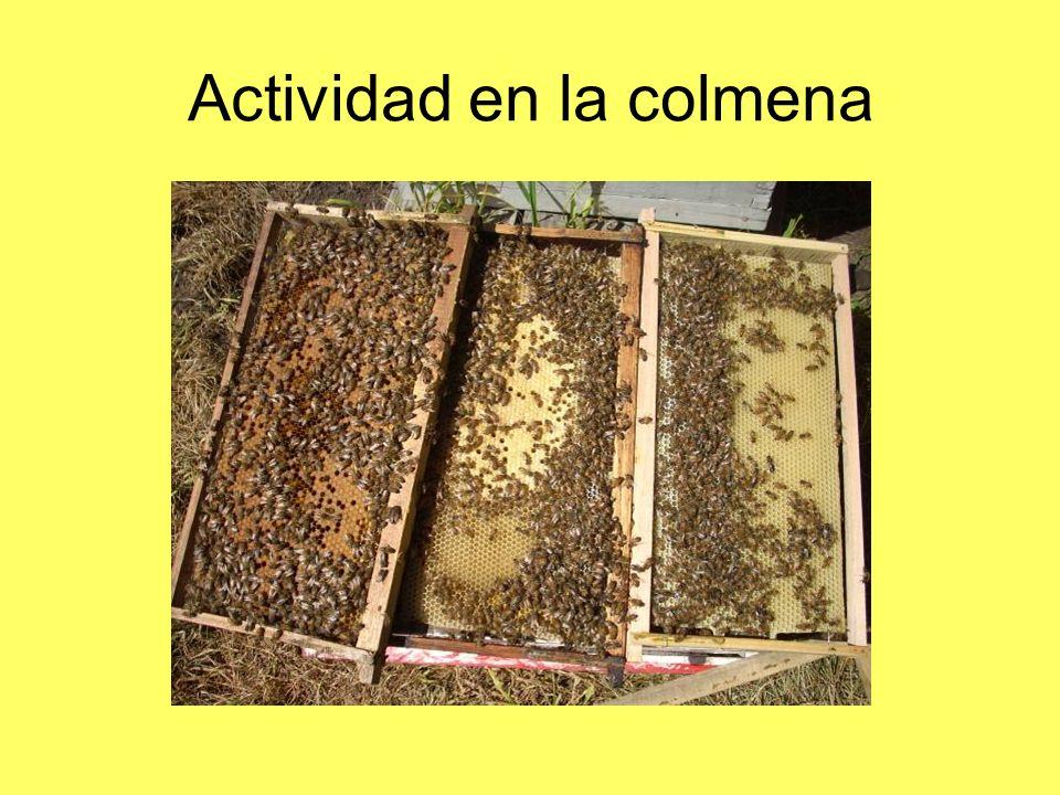 Actividad en la colmena