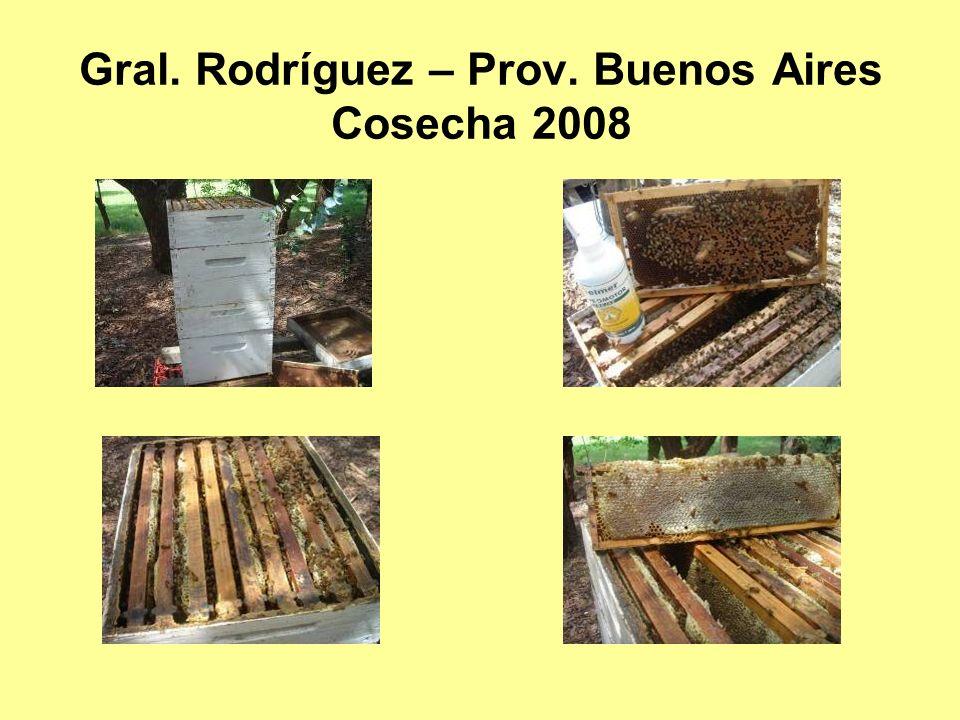 Gral. Rodríguez – Prov. Buenos Aires Cosecha 2008