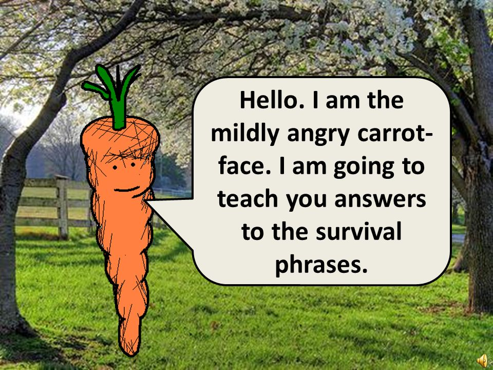 Hello. I am the mildly angry carrot-face. I am going to teach you answers to the survival phrases.