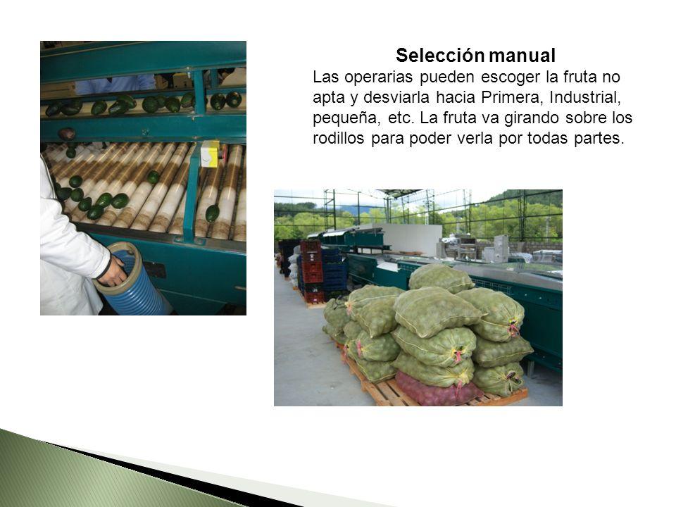 Selección manual Las operarias pueden escoger la fruta no apta y desviarla hacia Primera, Industrial, pequeña, etc.