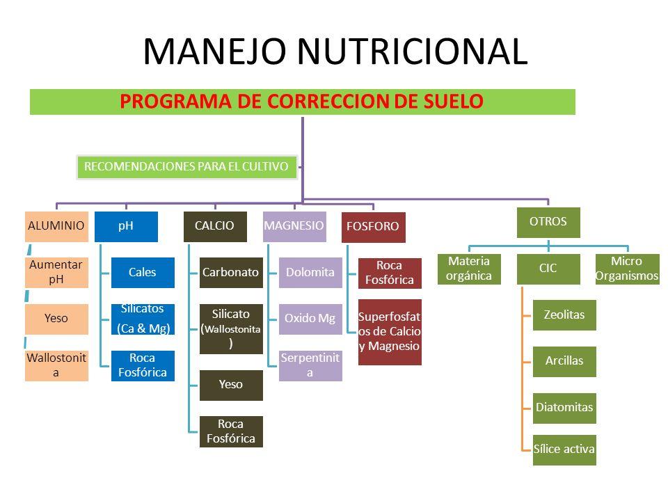 MANEJO NUTRICIONAL PROGRAMA DE CORRECCION DE SUELO ALUMINIO Aumentar pH Yeso Wallostonit a pH Cales Silicatos (Ca & Mg) Roca Fosfórica CALCIO Carbonat