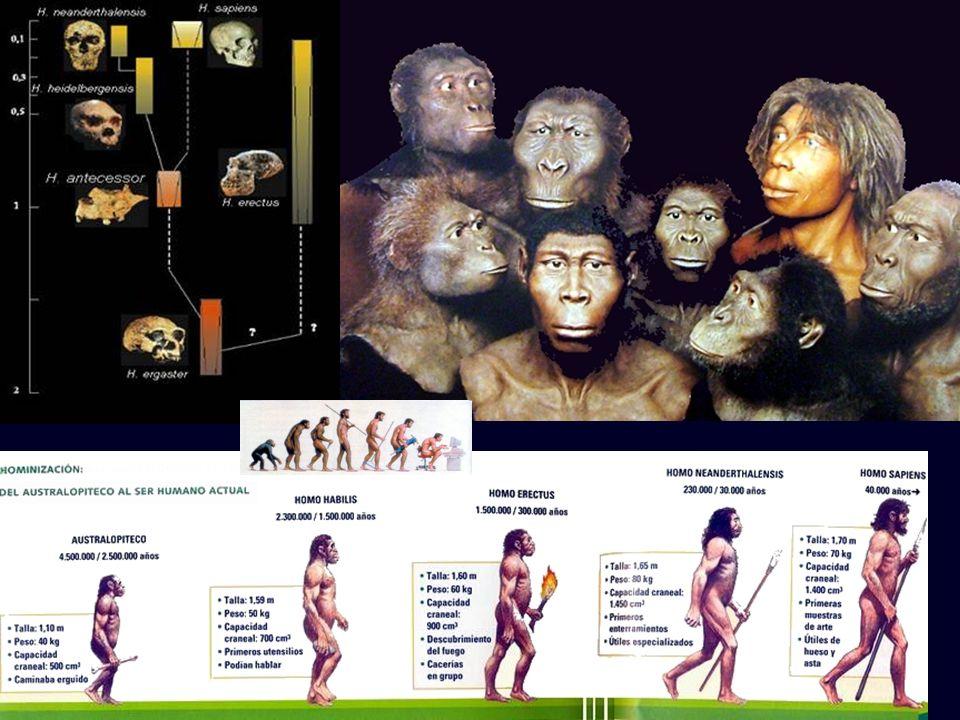 Mª Vvictoria Landa EDAD DE PIEDRA: NEOLÍTICO (PIEDRA PULIMENTADA) CRONOLOGÍA 5000/4000-3500 a.