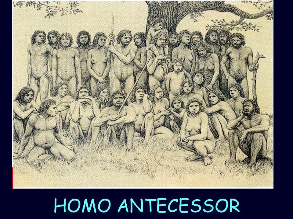 Mª Vvictoria Landa GRIEGOS Grecia: sobre todo de las islas de Rodas y Focea Siglo VI a.C.