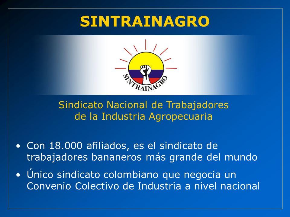 Sindicato Nacional de Trabajadores de la Industria Agropecuaria SINTRAINAGRO Con 18.000 afiliados, es el sindicato de trabajadores bananeros más grande del mundo Único sindicato colombiano que negocia un Convenio Colectivo de Industria a nivel nacional