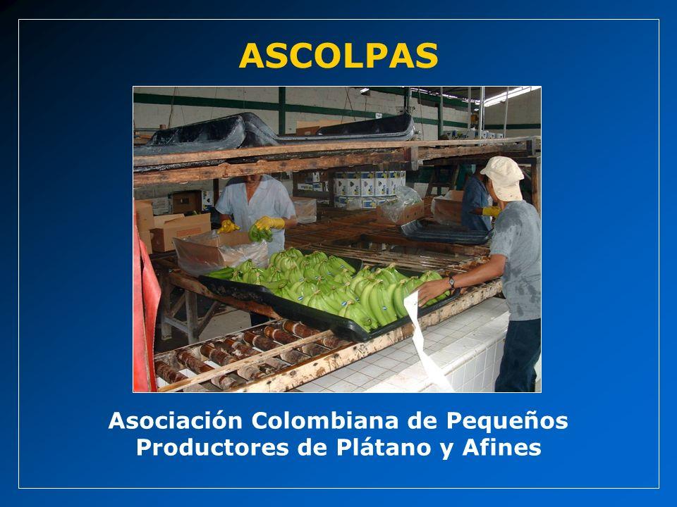 Asociación Colombiana de Pequeños Productores de Plátano y Afines ASCOLPAS