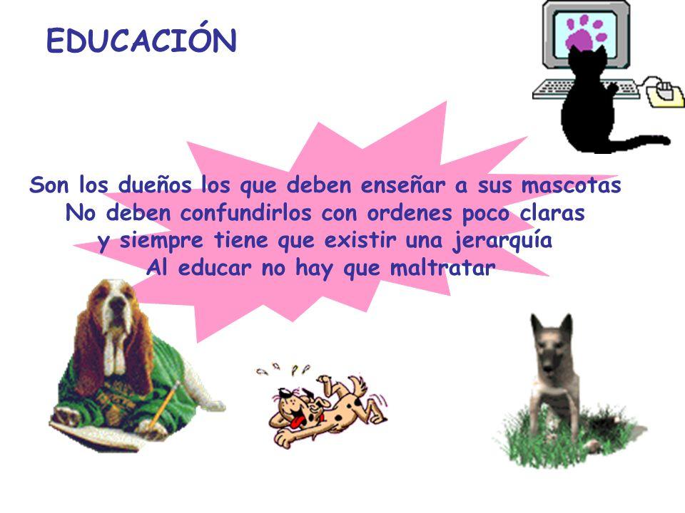 EDUCACIÓN Son los dueños los que deben enseñar a sus mascotas No deben confundirlos con ordenes poco claras y siempre tiene que existir una jerarquía