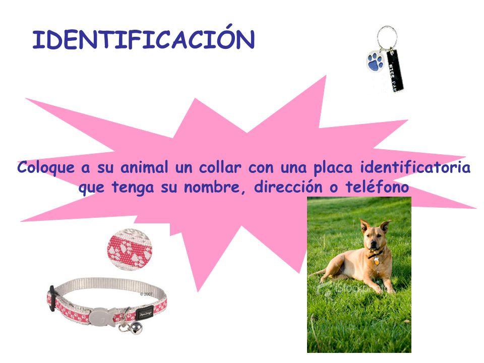 IDENTIFICACIÓN Coloque a su animal un collar con una placa identificatoria que tenga su nombre, dirección o teléfono