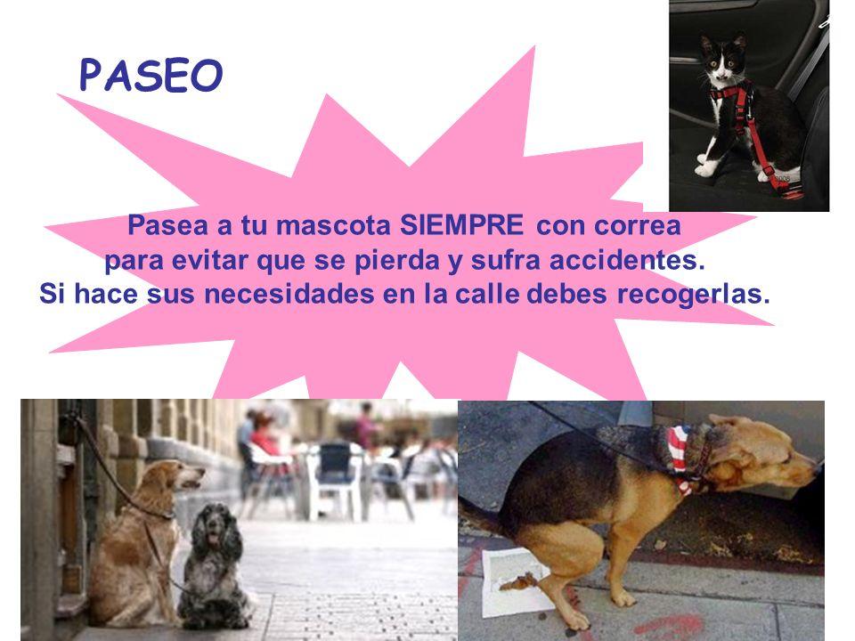 PASEO Pasea a tu mascota SIEMPRE con correa para evitar que se pierda y sufra accidentes. Si hace sus necesidades en la calle debes recogerlas.
