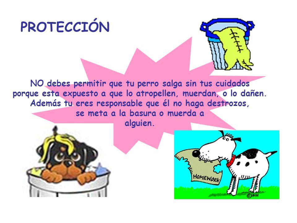 PROTECCIÓN NO debes permitir que tu perro salga sin tus cuidados porque esta expuesto a que lo atropellen, muerdan, o lo dañen. Además tu eres respons