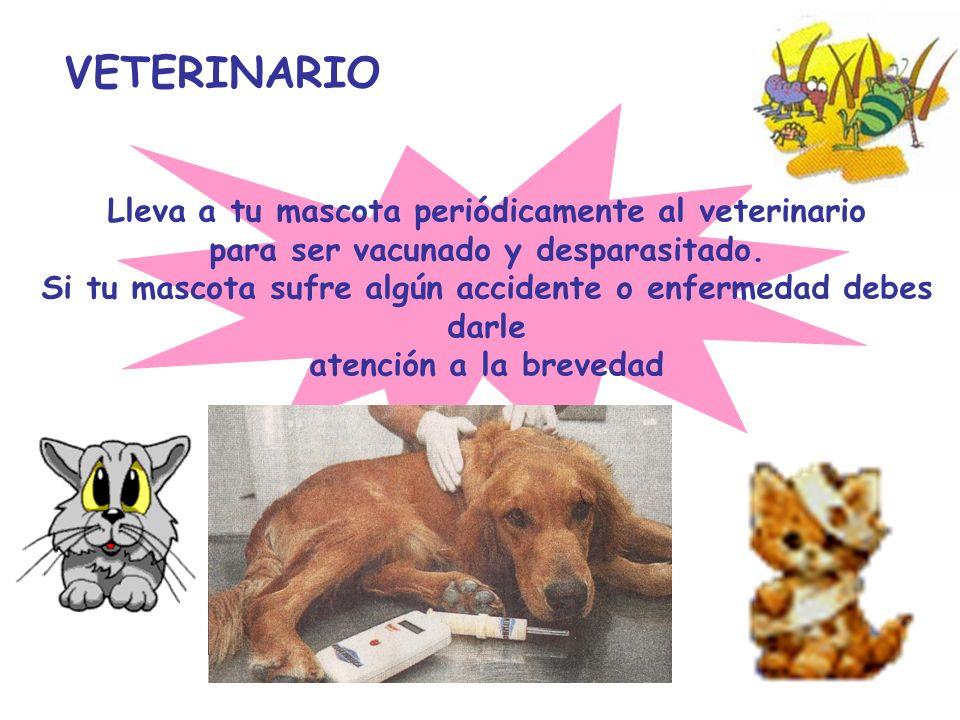 VETERINARIO Lleva a tu mascota periódicamente al veterinario para ser vacunado y desparasitado. Si tu mascota sufre algún accidente o enfermedad debes