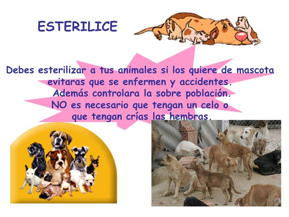ESTERILICE Debes esterilizar a tus animales si los quiere de mascota evitaras que se enfermen y accidentes. Además controlara la sobre población. NO e