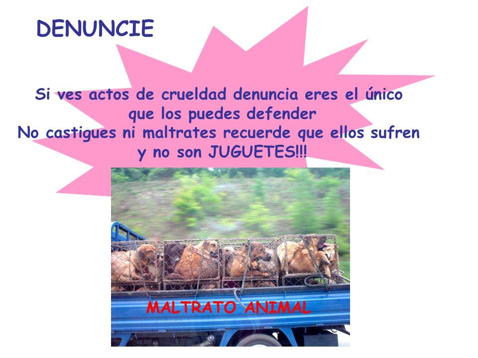 DENUNCIE Si ves actos de crueldad denuncia eres el único que los puedes defender No castigues ni maltrates recuerde que ellos sufren y no son JUGUETES