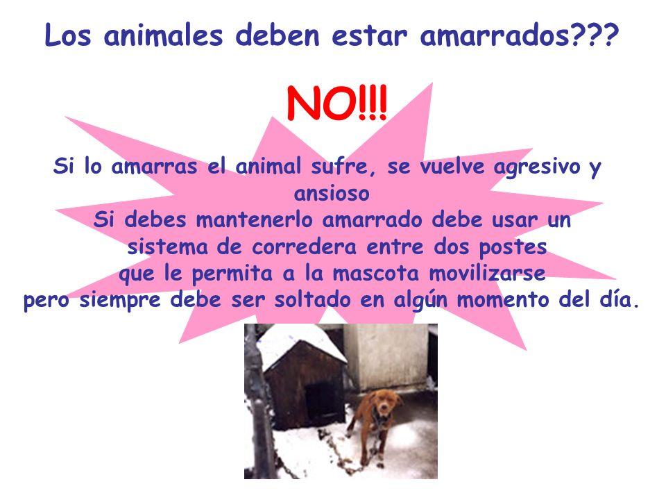 Los animales deben estar amarrados??? NO!!! Si lo amarras el animal sufre, se vuelve agresivo y ansioso Si debes mantenerlo amarrado debe usar un sist