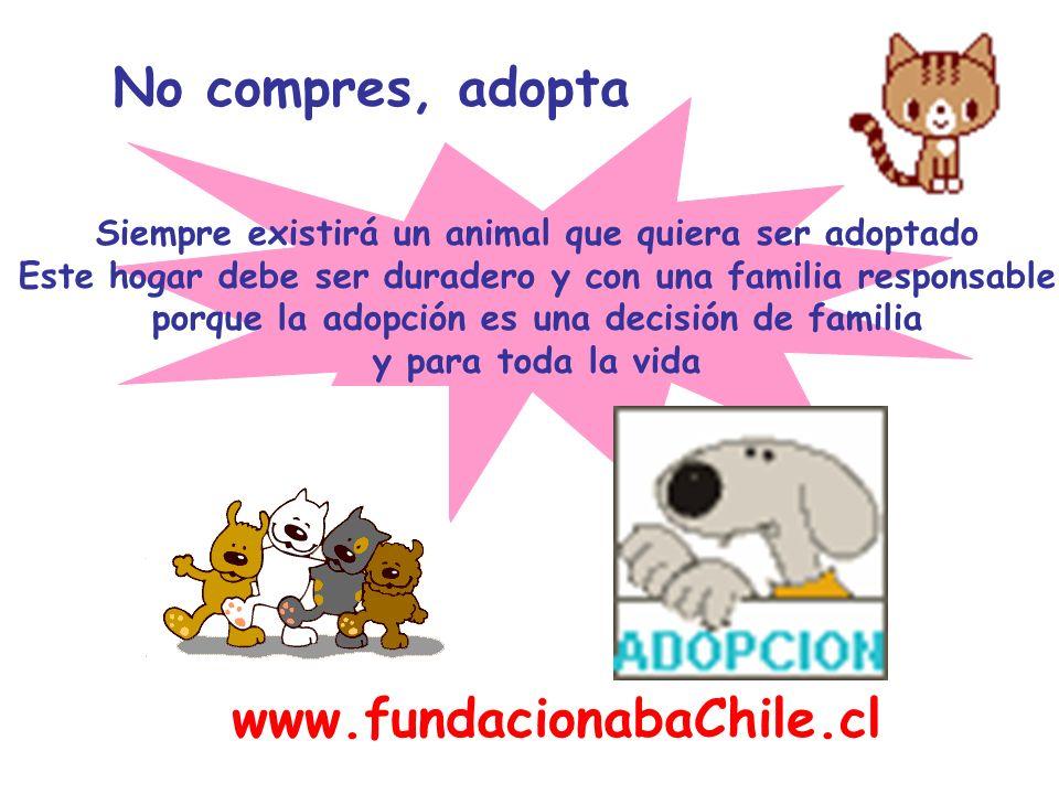 No compres, adopta Siempre existirá un animal que quiera ser adoptado Este hogar debe ser duradero y con una familia responsable porque la adopción es
