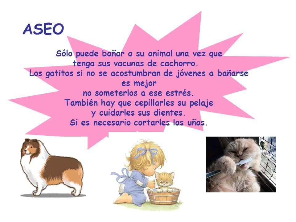 ASEO Sólo puede bañar a su animal una vez que tenga sus vacunas de cachorro. Los gatitos si no se acostumbran de jóvenes a bañarse es mejor no someter
