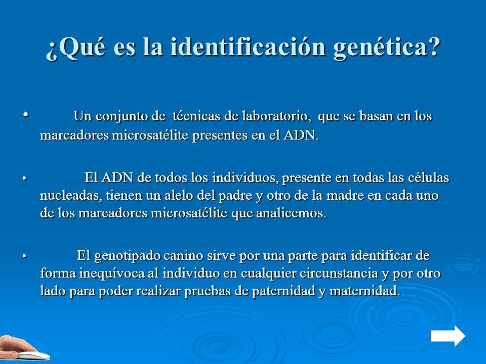 ¿Qué es la identificación genética? Un conjunto de técnicas de laboratorio, que se basan en los marcadores microsatélite presentes en el ADN. Un conju