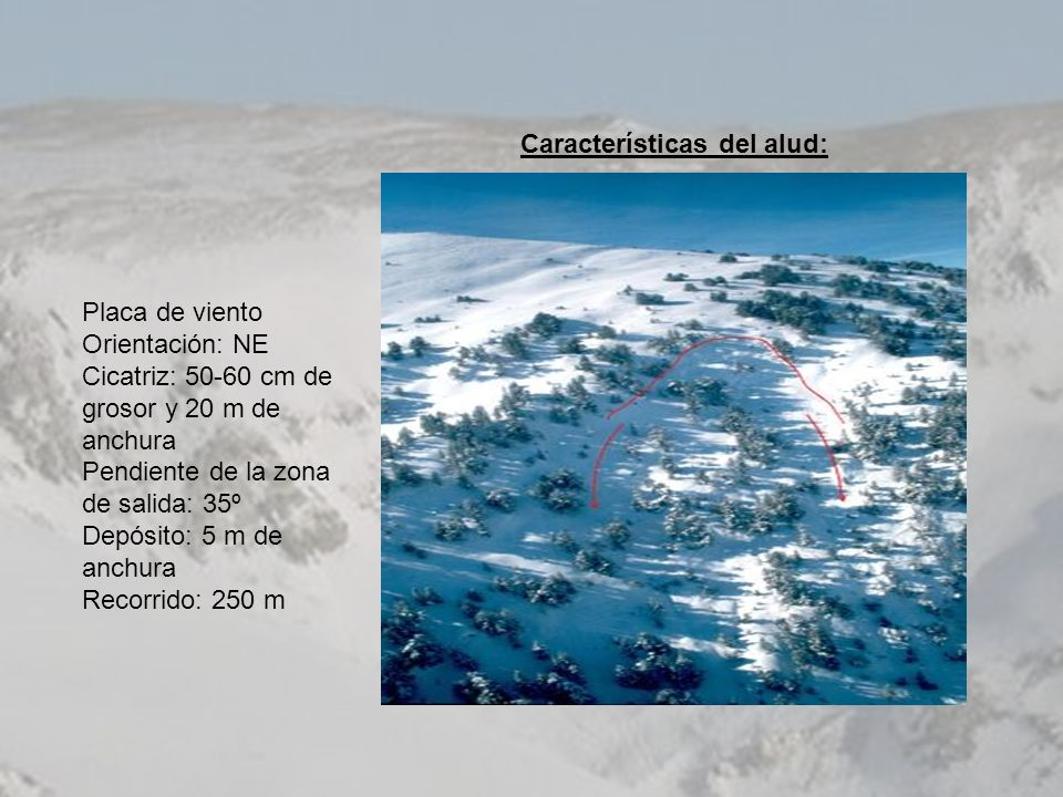 Placa de viento Orientación: NE Cicatriz: 50-60 cm de grosor y 20 m de anchura Pendiente de la zona de salida: 35º Depósito: 5 m de anchura Recorrido: