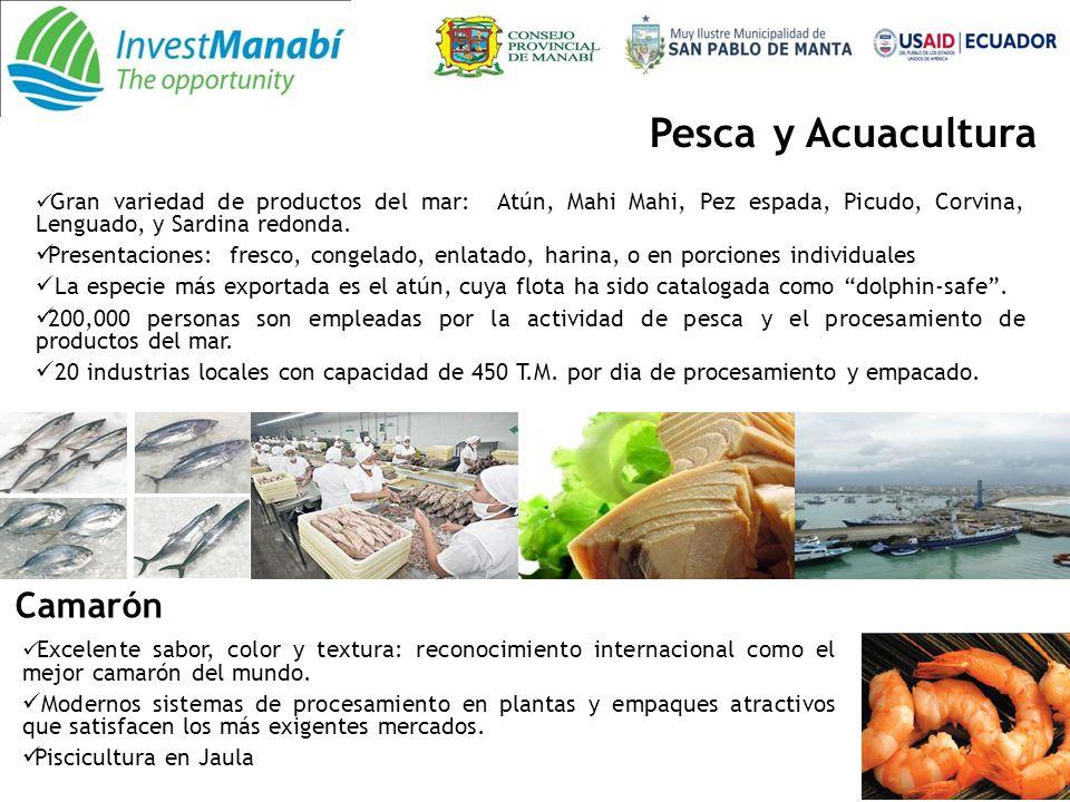 Silvicultura 45.000 ha., de bosques reforestados con especies maderables comerciales.