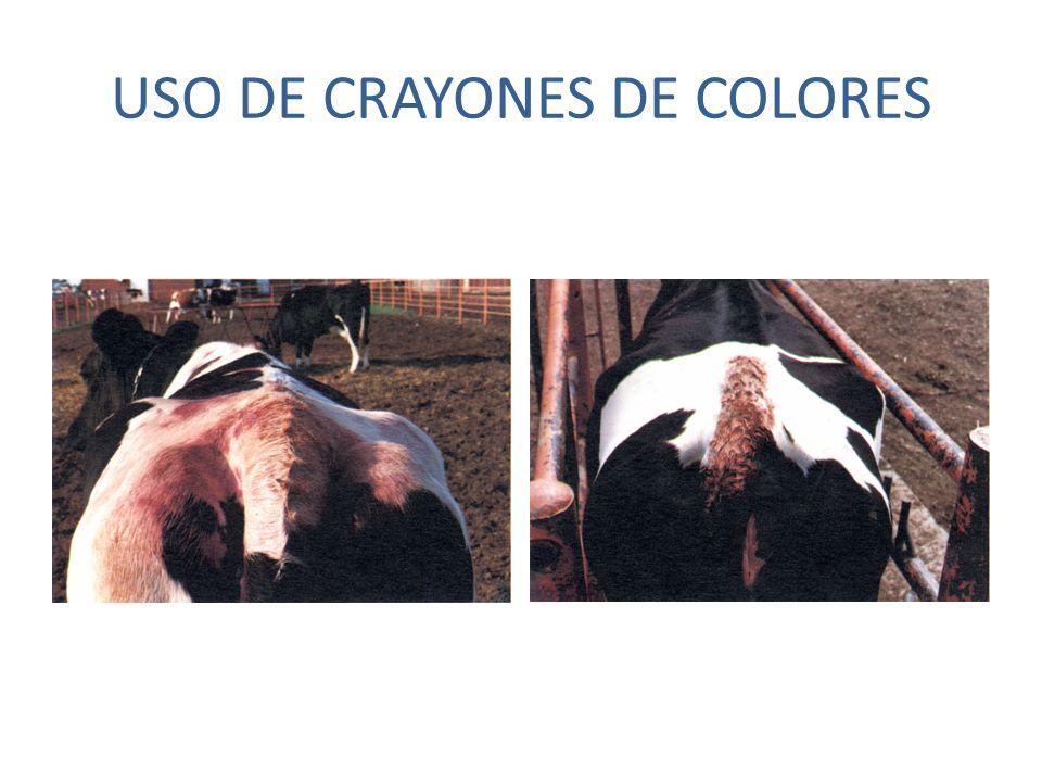USO DE CRAYONES DE COLORES