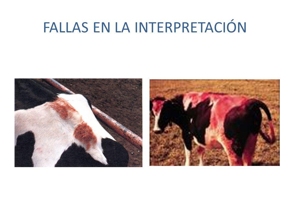 FALLAS EN LA INTERPRETACIÓN