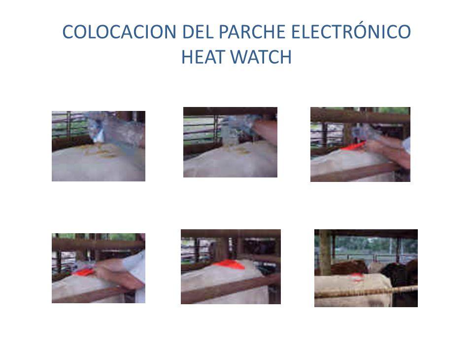 COLOCACION DEL PARCHE ELECTRÓNICO HEAT WATCH