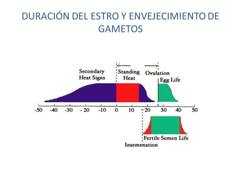 DURACIÓN DEL ESTRO Y ENVEJECIMIENTO DE GAMETOS