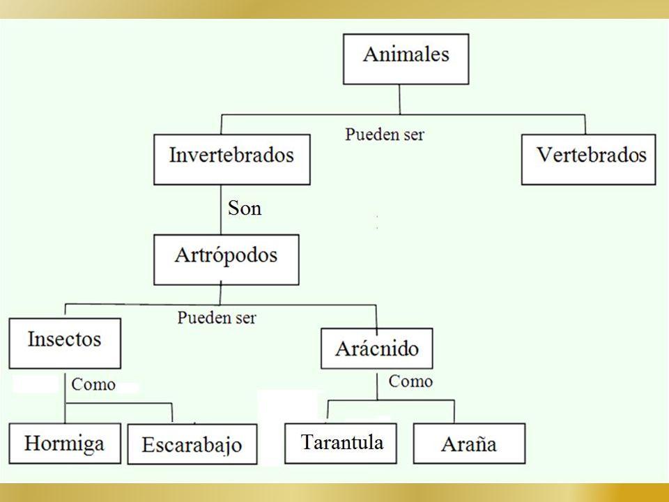 Actividad: Realizar el mapa conceptual del siguiente texto Existen muchas clases de animales que pueden ser vertebrados e invertebrados. Dentro de los