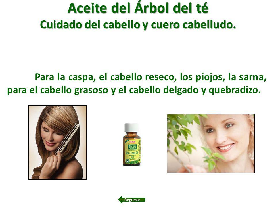 Aceite del Árbol del té Cuidado del cabello y cuero cabelludo. Para la caspa, el cabello reseco, los piojos, la sarna, para el cabello grasoso y el ca