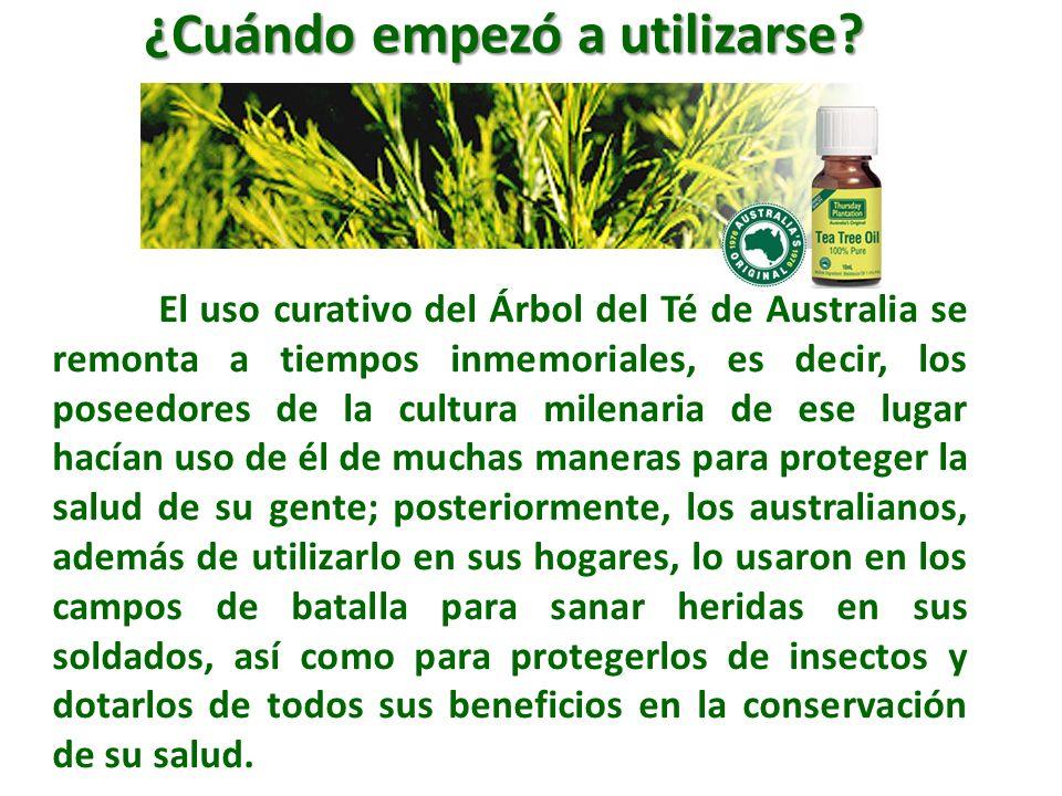 El uso curativo del Árbol del Té de Australia se remonta a tiempos inmemoriales, es decir, los poseedores de la cultura milenaria de ese lugar hacían