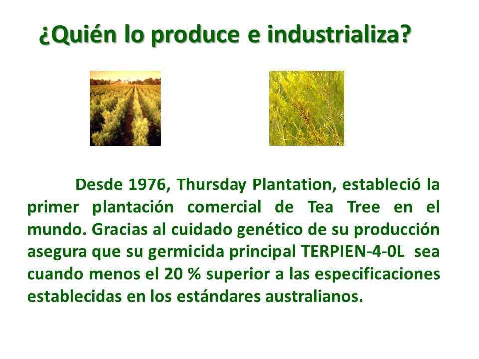 Desde 1976, Thursday Plantation, estableció la primer plantación comercial de Tea Tree en el mundo. Gracias al cuidado genético de su producción asegu