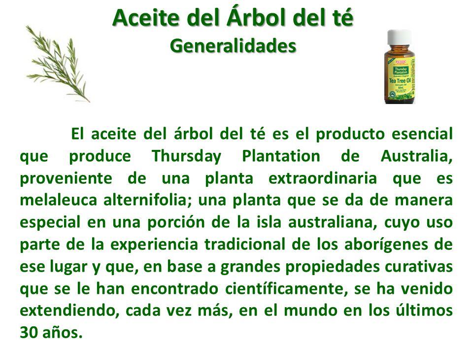 El aceite del árbol del té es el producto esencial que produce Thursday Plantation de Australia, proveniente de una planta extraordinaria que es melal