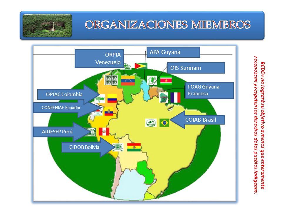 APA Guyana OIS Surinam FOAG Guyana Francesa ORPIA Venezuela COIAB Brasil CONFENIAE Ecuador OPIAC Colombia AIDESEP Perú CIDOB Bolivia REDD+ no logrará