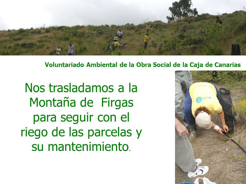 Voluntariado Ambiental de la Obra Social de la Caja de Canarias Continuamos con la restauración de bebederos naturales para la avifauna, esta vez en la zona de Inagua.