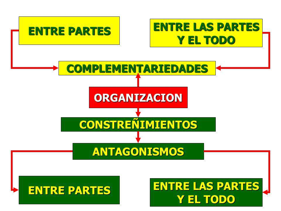 ENTRE PARTES ENTRE LAS PARTES Y EL TODO COMPLEMENTARIEDADES ORGANIZACION CONSTREÑIMIENTOS ANTAGONISMOS ENTRE PARTES ENTRE LAS PARTES Y EL TODO