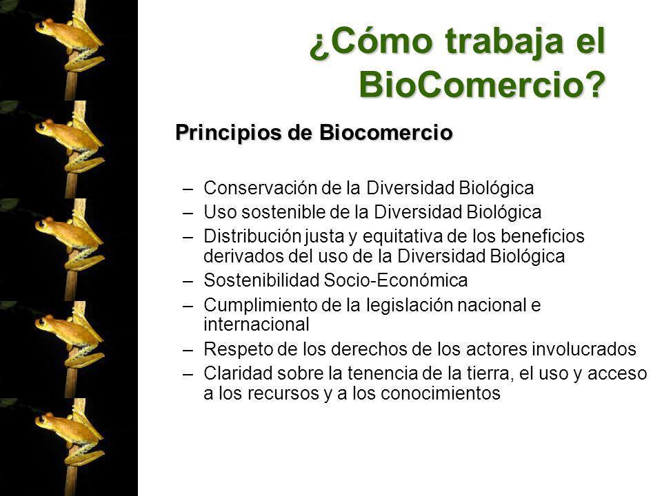 ¿Cómo trabaja el BioComercio? Principios de Biocomercio –Conservación de la Diversidad Biológica –Uso sostenible de la Diversidad Biológica –Distribuc