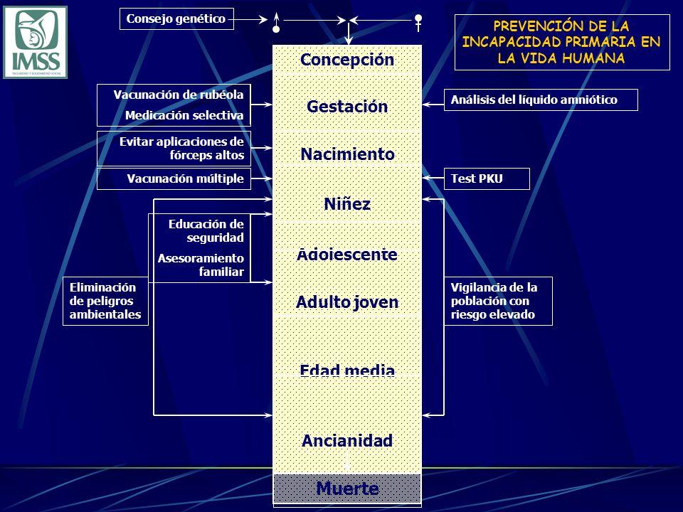 PREVENCIÓN DE LA INCAPACIDAD PRIMARIA EN LA VIDA HUMANA Vacunación de rubéola Medicación selectiva Concepción Gestación Nacimiento Niñez Adolescente A